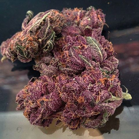 Buy Purple Kush