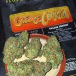 Buy-Orange-Cookies-Jungleboys2.jpg